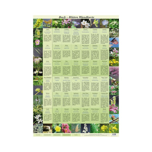 Bach flowers poster